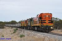 1204, 873, 851 and 850 on 2CG2 loaded grain train seen here heading though Kyancutta (SA) on the 13th April 2015