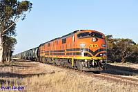 GM43, GM42 and 2216 on 3142S grain seen here powering though Borrika (SA) on the 9th April 2015