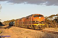 GM43, GM42 and 2216 on 3142S grain seen here powering though Wynarka (SA) on the 9th April 2015