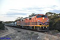 GM43, GM42 and 2216 on 3142S grain seen here powering though Kulde (SA) on the 9th April 2015